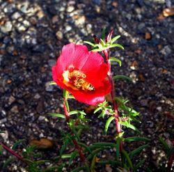 les miels du rucher de Bose