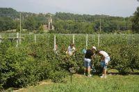 Ler mais: Campos Internacionais de trabalho (CIT)